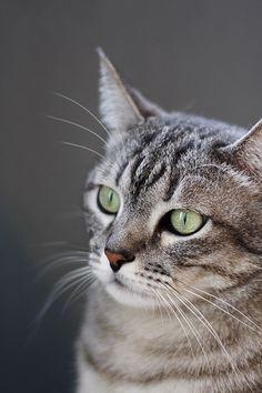 Pretty Kitty Portrairt