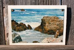 Squirrel by the Sea Blank Note Card Animal by HBBeanstalk on Etsy, $3.00