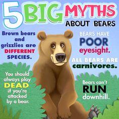 5 Myths about Bears