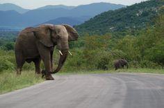 Krugerpark Mpumalanga Limpopo Zuid Afrika vakanties en reizen GoSouthAfrica.nl