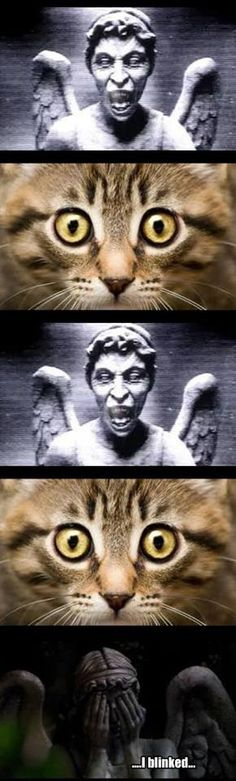 Doctor Who - Cat vs Weeping Angel
