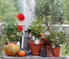 Greenhouse in september