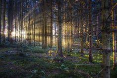 Foresta al tramonto