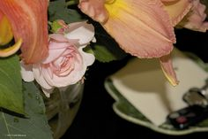 Heritage rose, salmon day lilies, 2014