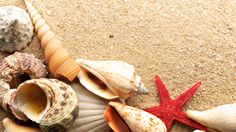 Red Sea Star HD wallpaper - Animal Backgrounds