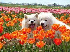 furry friends & flowers .. X ღɱɧღ ||