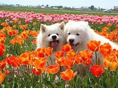 furry friends & flowers .. X ღɱɧღ ||