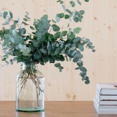 Eukalyptus in einer klaren Vase. Eukalyptus in einer klaren Vase. Eukalyptus in einer klaren Vase. Vases Decor, Plant Decor, Plantas Indoor, Grand Vase En Verre, Decoration Plante, Garden Wedding Decorations, Clear Vases, Deco Floral, Fresh Flowers