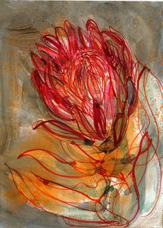 'Protea in My Studio' by Laura Murphy Frankstone Protea Art, Free Hand Designs, Nature Sketch, Organic Art, Floral Drawing, Soul Art, Botanical Art, Art Pictures, Painting & Drawing