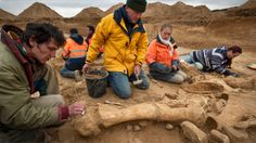 """You know what's rare? Woolly mammoth skeletons. You know what's even rarer? Beautifully preserved, near-complete, French woolly mammoth skeletons. Archaeologists just dug up the latter.  Dubbed """"Helmut"""" by the archaeologists who discovered it, the specimen was encountered accidentally during an unrelated excavation at the Changis-sur-Marne riverbank, about 30 miles northeast of Paris. According to the Associated Press, it's only the third mammoth to be discovered in France in the last 150…"""