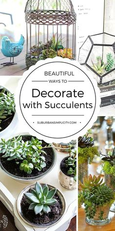 Succulents are so easy to decorate with. Whether live or faux, they add such charm and style to your indoor or outdoor decor. Come be inspired by these Beautiful Ways to Decorate with Succulents Succulent DIY Types Of Succulents, Succulents In Containers, Cacti And Succulents, Planting Succulents, Succulent Gardening, Succulent Terrarium, Gardening Tips, Container Gardening, Succulent Landscaping