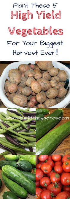 """High Yield Garden Vegetables - Sometimes you just really want the veggies your grow in your garden to """"mean something"""". Lettuce and other leafy greens are great, but if you really want your garden produce to mean something to your food supply then you should choose these 5 High Yield Garden Vegetables."""