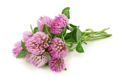 Red Clover Fertility Tonic