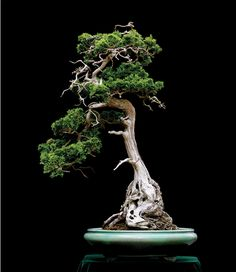 Revisiting An Old & Still Relevant Bonsai Debate Hinoki Cypress, Belle Plante, Bonsai Styles, Miniature Plants, Bonsai Garden, Growing Tree, Ikebana, Horticulture, Houseplants