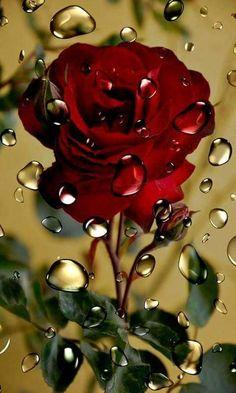 Beautiful Rose Flowers, Flowers Gif, Beautiful Flowers Wallpapers, Pretty Flowers, Love Rose, Red Flowers, Beautiful Flower Drawings, Colorful Flowers, Diamond Drawing