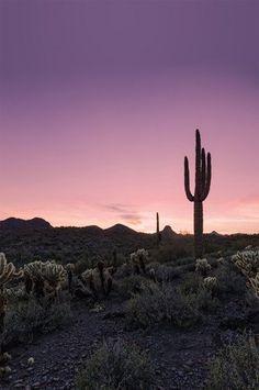 4634 Desert Sunset Cactus Landscape Printed Photography Backdrop - Backdrop Outlet
