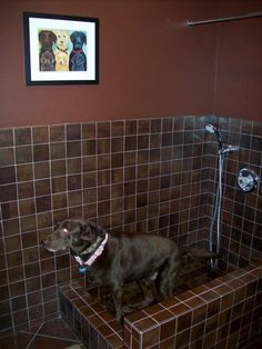 The newest trend for pet parents....doggy shower/baths in the mudroom! You can also rinse off your muddy shoes here.