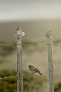 Birds on a fence. Life is made better by noticing the little things like this around you every single day. It is a beautiful world we live in:) Little Birds, Love Birds, Beautiful Birds, Small Birds, Beautiful Life, Beautiful Images, Beautiful Things, Jolie Photo, Simple Pleasures