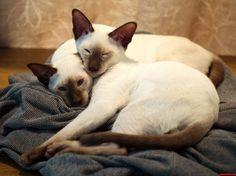 The Inseparable Leeloo Dallas - http://cutecatshq.com/cats/the-inseparable-leeloo-dallas/