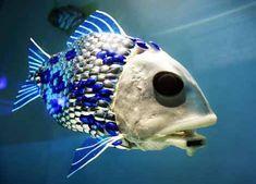 Weird Sea Creature