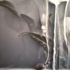 Onderwatertulp_2, uit een foto van Danielle Kwaaitaal. Fotofestival Naarden