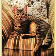 Sophie chillin' #carlsbad #carlsbadca #carlsbadbeach #carlsbadlagoon #carlsbadphotographer #carlsbadcalifornia #follow4follow #followforfollow #followme #cat #cats #catsofinstagram #catstagram #petsitter #petsitting #petsittingfun #petsittinglife by divinecaninepetsitting