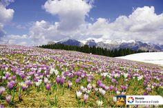 Parco Naturale Dolomiti d'Ampezzo - Dolomites, province of Belluno, Veneto, Northern Italy