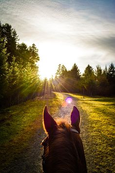 """Beautiful """"between the ears"""" photo while horseback riding. Nothing beats this view."""
