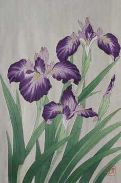 First Edition Print Kakitsubata(Japanese Iris) Printed 1951 Shodo Kawarazaki