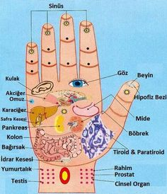 Acupuncture For Destress reflexology .the aim of hand reflexology massage is to sufficiently destress the body parts in order to facilitate its ability to repair itself. There are many nerve endings within the hand Health And Beauty, Health And Wellness, Health Tips, Health Fitness, Health Care, Holistic Wellness, Health Recipes, Holistic Healing, Drink Recipes