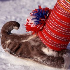 Traditional Sami shoe made from reindeer skin.: Kautokeino, Norwegian Lapland: Arctic & Antarctic photographs, pictures & images from Bryan & Cherry Alexander Photography. Performance Kunst, Kola Peninsula, Norway Viking, Lappland, Folk Costume, Costumes, Scandinavian Christmas, My Heritage, Reindeer