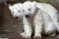 Cutest baby animals in the Animal Kingdom - NY Daily News