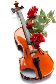780 Best Violins Roses Images In 2019 Cello Music Instruments