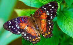 en-guzel-kelebek-resimleri-fotograflari-20