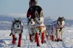 Gorgeous photo of Aliy's team during the 2012 Iditarod