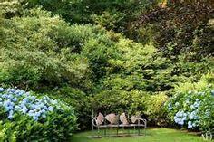 Purple Hydrangea garden - Bing Images