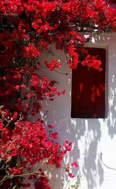 Facade and bougainvillea Greece Travel Inspiration - red bougainvillea. Folegandros Is Bougainvillea, Flower Aesthetic, Red Aesthetic, Flower Wallpaper, Iphone Wallpaper, Red Shutters, Greece Travel, Wall Collage, Aesthetic Wallpapers