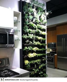 Indoor wall o' herbs.