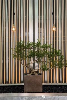 【首发】CCD郑忠:深圳中洲万豪|一间美术馆酒店
