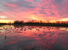 Missouri–The Perfect Place for Duck Hunting    If you want to experience 'the real thrill of shooting migratory birds' in large flocks then it's time to leave  your sanctuary and fly to Missouri before the duck hunting ......  http://www.showmesnowgeese.com/missouri-the-perfect-place-for-duck-hunting/