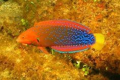 www.aquadepth.com