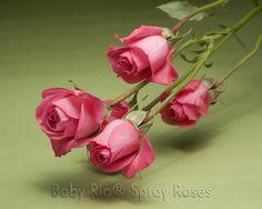 Baby Rio® TWINKLE BRIDE Spray Rose