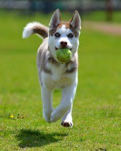Sept. 6th: Demetri   http://ift.tt/2ckjoEF via /r/dogpictures http://ift.tt/2cwrU5t  #lovabledogsaroundtheworld