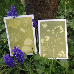 Sent off sun printed #postcards to dear friends, day 8 of the #100daysofbotanicalcollages #the100dayproject