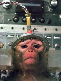 Atomic Monkey