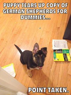 """Puppy tears up copy of German Shepherds for dummies... Point Taken."" ~ Dog Shaming shame - German Shepherds."