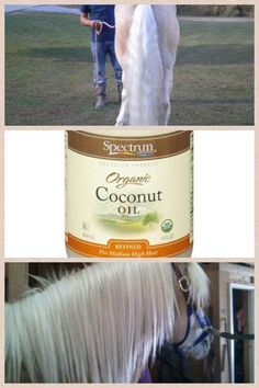 Coconut oil works wonders on a horses mane and tail. Just massage it into the base of the mane or tail and leave it don't wash it out. You can do it as much as you like. It will soon make it soft and supple and also helps with hair growth. You can buy it from the store.