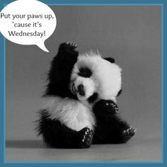 It's Wednesday quotes quote days of the week wednesday hump day wednesday quotes happy wednesday