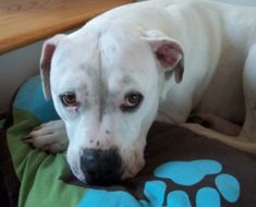 Responsible Pet Ownership Blog: How to Train a Fearful or Insecure Dog