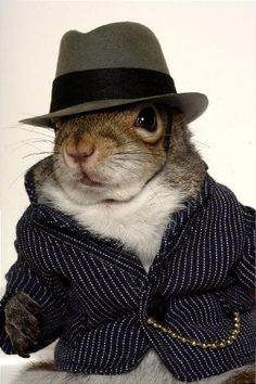 Sugar Bush Squirrel - International Superstar - Supermodel & Military Hero